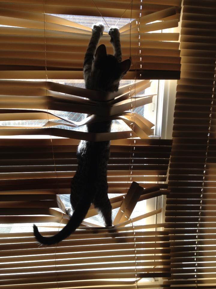 catblinds