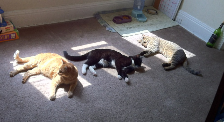 Use cat(s) to help determine your household's most bountiful solar zones!